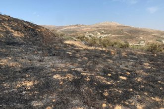 Israeli settlers attack Palestinian farmers picking olives in the village of Burin, south of the northern West Bank city of Nablus on October 2019