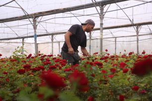 The coronavirus has demolished the ability of Gaza's flower farmers selling their produce abroad [Mohammed Asad/Middle East Monitor]