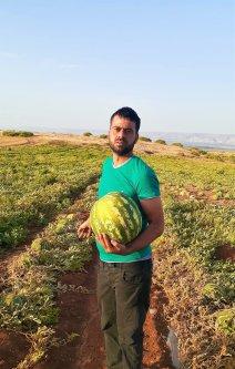 Farmer Sleiman Sawafta at his watermelon field. Bardala village june 2020. [Fareed Taamallah]