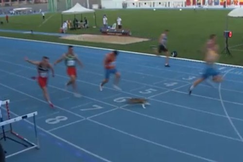 Thumbnail - Cat sprints across the finish line at Turkey Balkan U20 race