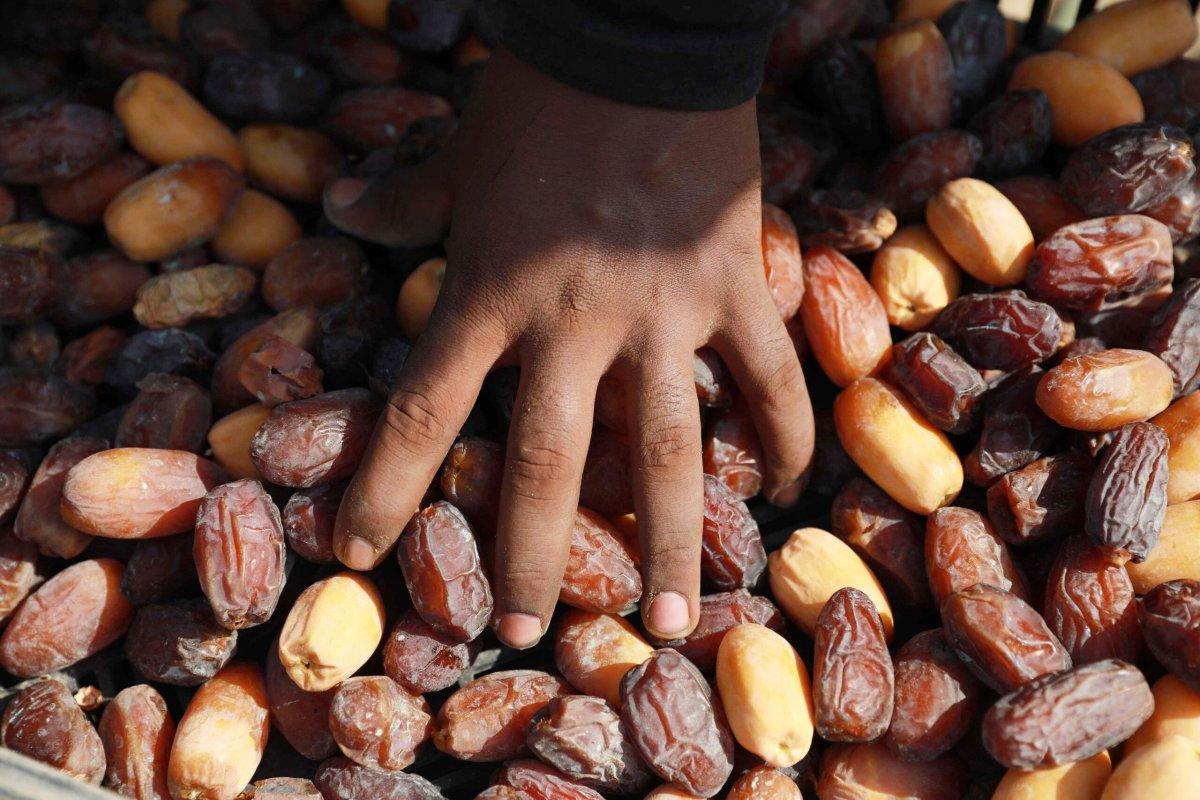 JERICHO, WEST BANK - SEPTEMBER 09: Medjools are seen as the medjool harvest season starts in Jericho, West Bank on September 09, 2020. ( Issam Rimawi - Anadolu Agency )