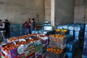 Fresh tomatoes picked at a farm in the West Bank, 3 November 2020