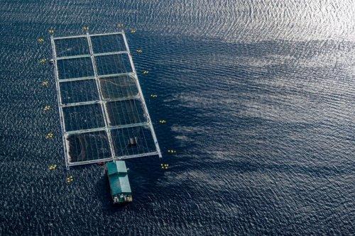 A fish farm [James MacDonald/Bloomberg via Getty Images]