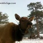 deer at office