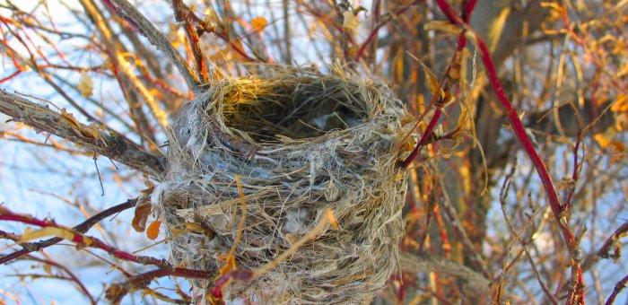 An Empty Nest Thanksgiving….good news & bad news