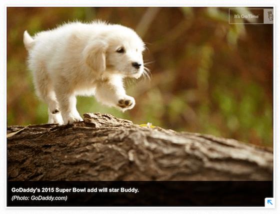 Puppy_vs__puppy2