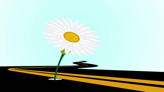 flower-road-570