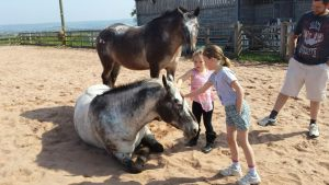 Meet the horses at Middlewick Holiday Cottages