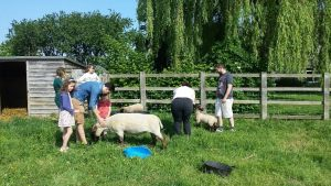 Family at Middlewick Holiday Cottages meeting the sheep, lambs and goats
