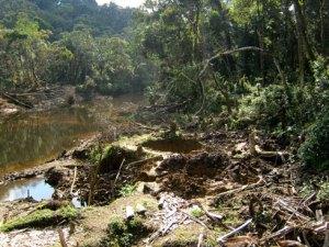 Une proposition de Code forestier pour Madagascar est en cours d'élaboration.