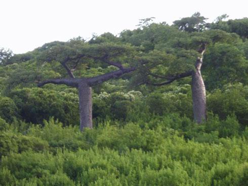 « Ici et Ailleurs » : Pour faire connaître les destinations touristiques de la Grande Ile