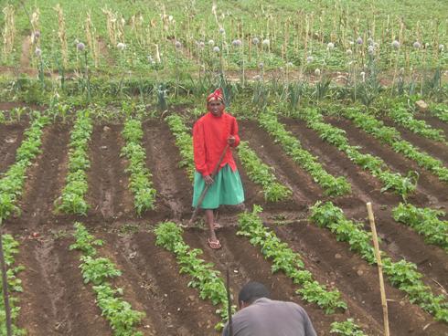 PAM : Accompagnement des petits producteurs pour affronter les périodes de soudure