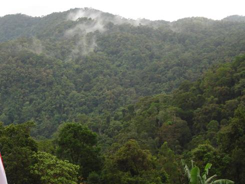 Ministère de l'Environnement : Utilisation d'images satellites pour alerter sur la déforestation