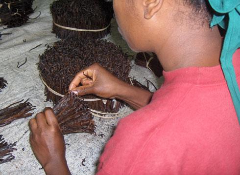 Bois de rose : Blanchiment d'argent à travers la filière vanille
