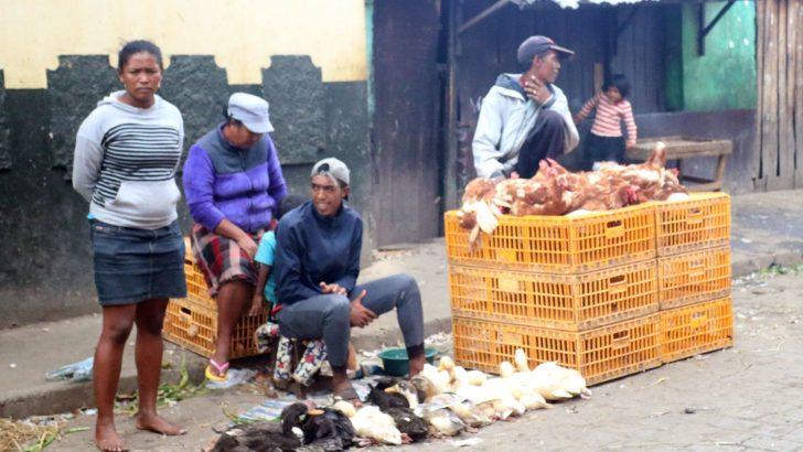 Poulet de chair et poule pondeuse : Deux filières porteuses en péril