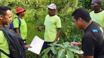 Filière vanille : Une certification internationale pour 1 791 producteurs