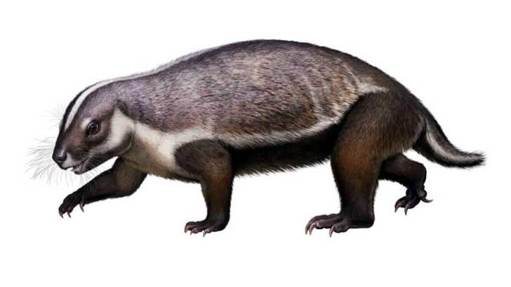 Découverte :Madagascar terre de naissance de l'«Adalatherium»