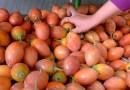 """En Valledupar se reactiva el Mercado Campesino en el marco de la estrategia """"Yo le compro a Valledupar"""""""