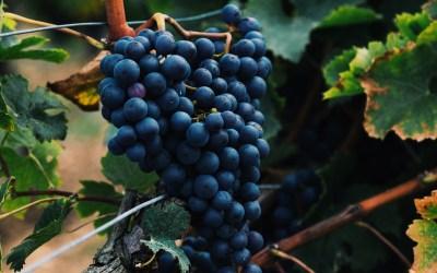 Pesticides : parlons peu mais parlons vin !