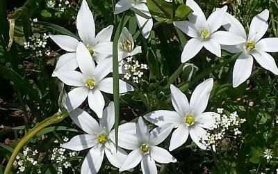 Pour les chocs émotionnels, découvrez la star des fleurs de Bach