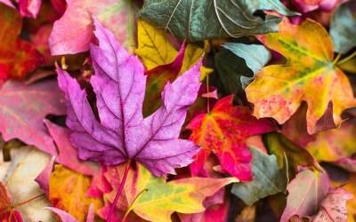Colon : la cure d'automne en naturopathie
