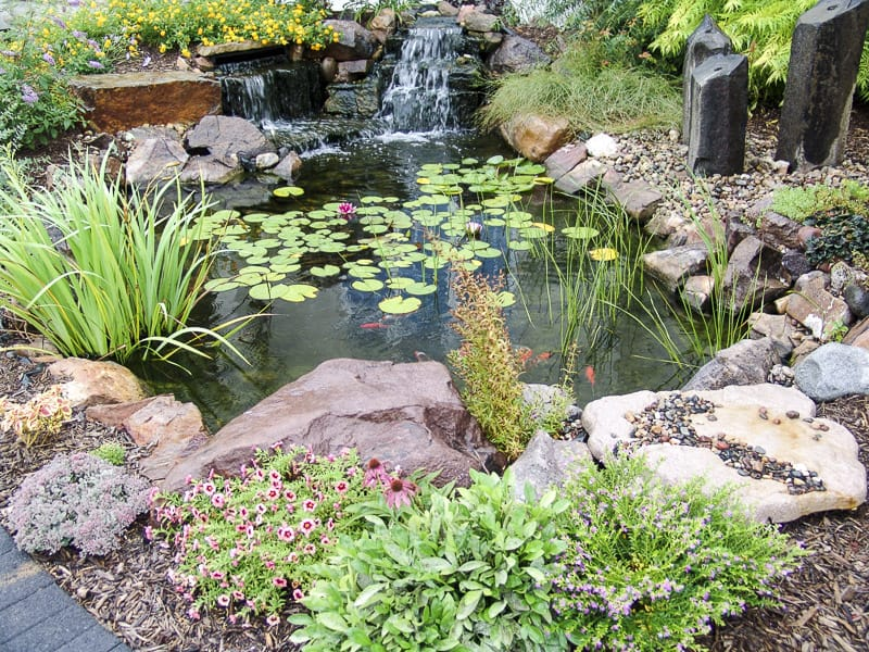 Lily Pond Aquascape