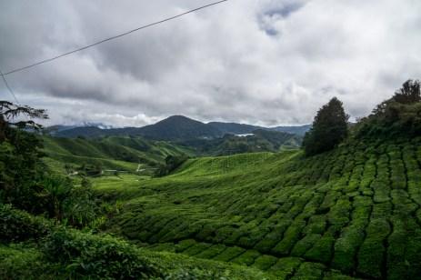 Malaysia-05191