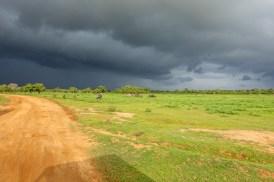 SriLanka-01526