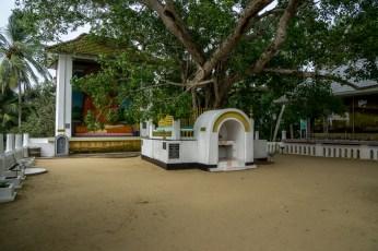 SriLanka-05118
