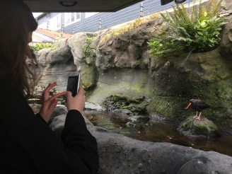 Midlife Sentence | Seattle Aquarium