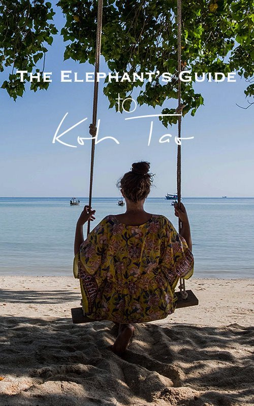 Heading to the Gulf of Thailand? Don't miss a visit to the Turtle Island biased with my travel guide Koh Tao with the best places to eat, sleep & all the things to do. #thailand #kohtao