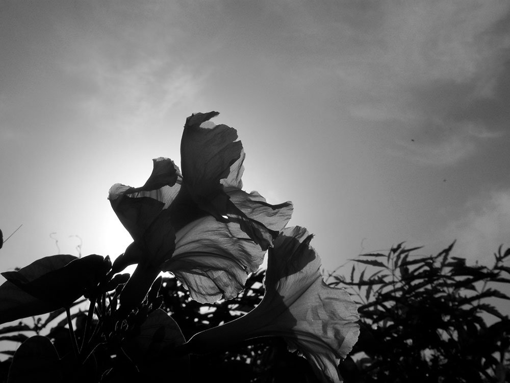 solotravel-seychelles-midnightblueelephant