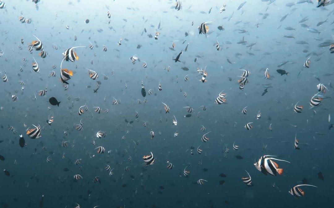 Scuba Diving Tips for Beginners & New Mermaids.