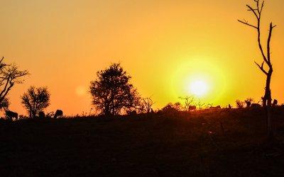 Lions, giraffes & warthogs, oh my – African Safari Adentures.