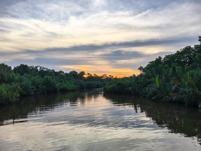 Want to find orangutans in Borneo? Come along for the ride of a life time in the jungle of Tanjung Puting where you can find them roam in the wild.