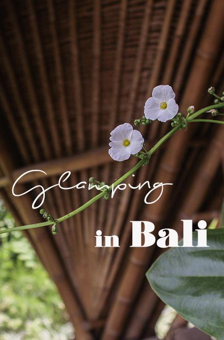 Looking for the perfect mix between a down to earth yet luxury accommodation? Glamping in Bali is the thing to do and I have found just the place right amongst the rice paddies... #bali #indonesia #glamping