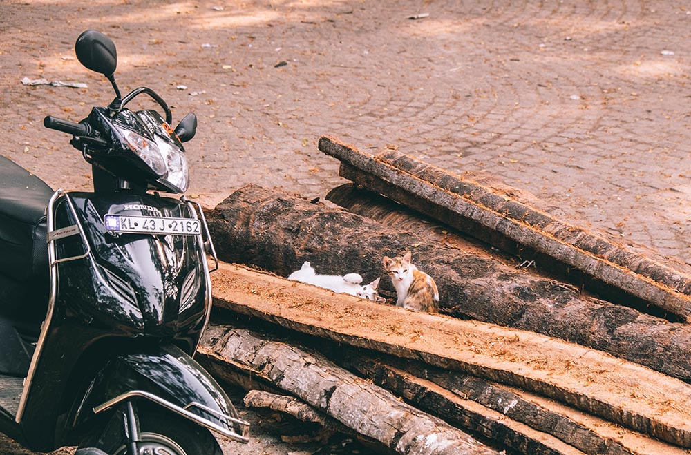 Black vespa next to wood logs with kittens - Great Indian Blog Train