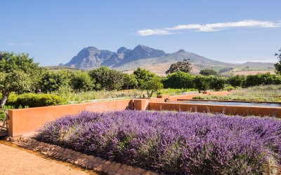 Babylonstoren – The best place for Wine Tasting, Stellenbosch.