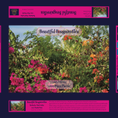 Blaze of Bougainvillea, Bougainvillea, Bright Flowers, Barbados, Flowers, Hedgerow, Hedgerow Flowers