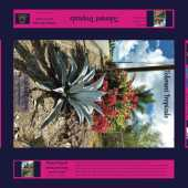 Tolerant Tropical Plants, Agave, poinsettia, palm tree, jigsaw