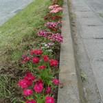 花壇にきれいな花が咲いています