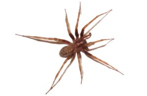 house spider removal memphis