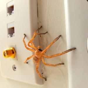repel pest the natural way