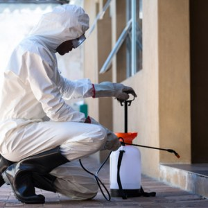 reasons to hire pest control