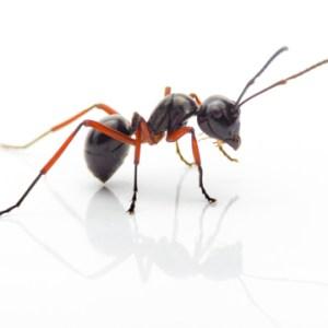 bug bad guys 1