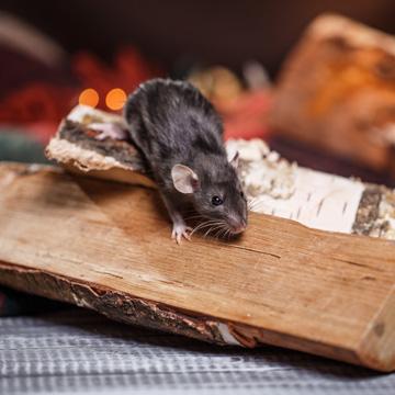 winter pest prevention