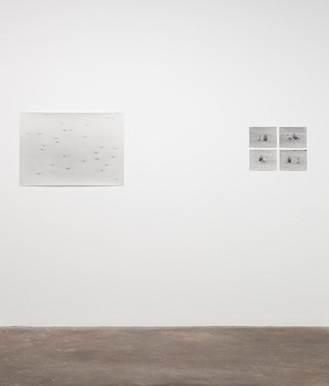 Jochen Lempert, installation view, Midway Contemporary Art. Left: Wasserlaüfer (Delhi), 2011. B&w photograph, silver gelatin print. 25 x 35 ½ inches. Right: Untitled (Pigeons), 2004. 4 b&w photographs, silver gelatin prints. 7 x 9 ¼ inches each, 15 x 19 ¾ inches overall.