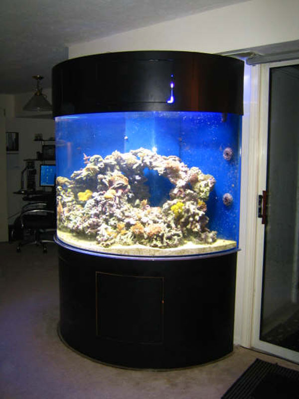 Photo Gallery Of Acrylic Fish Tanks And Aquariums With