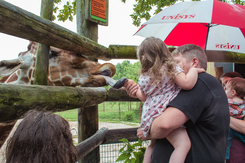 Child feeding Giraffe at Dickerson Park Zoo in Springfield Missouri
