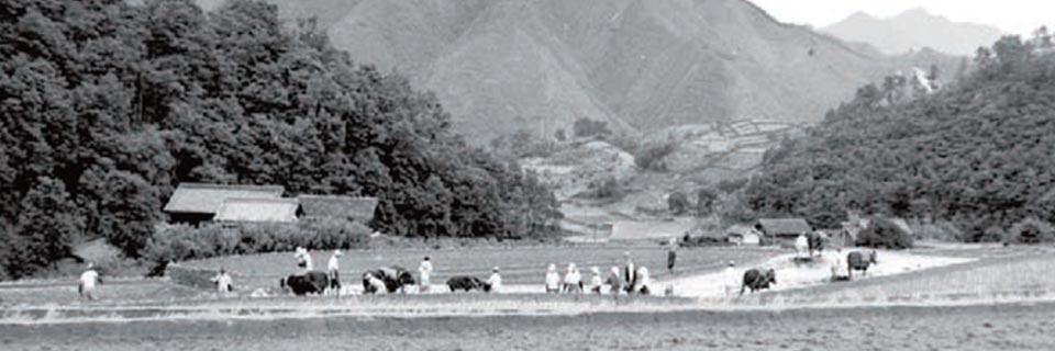 Matsusaka marhahús munkatársak